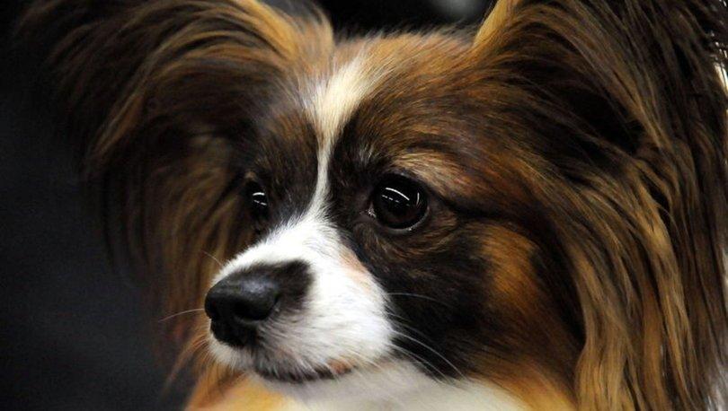 Rüyada köpek görmek ne anlama gelir?