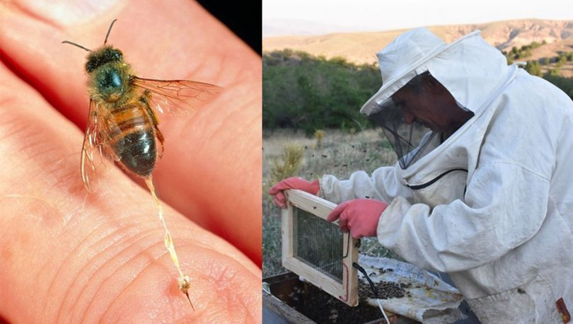Arı zehriyle sağlıklarına kavuşuyorlar
