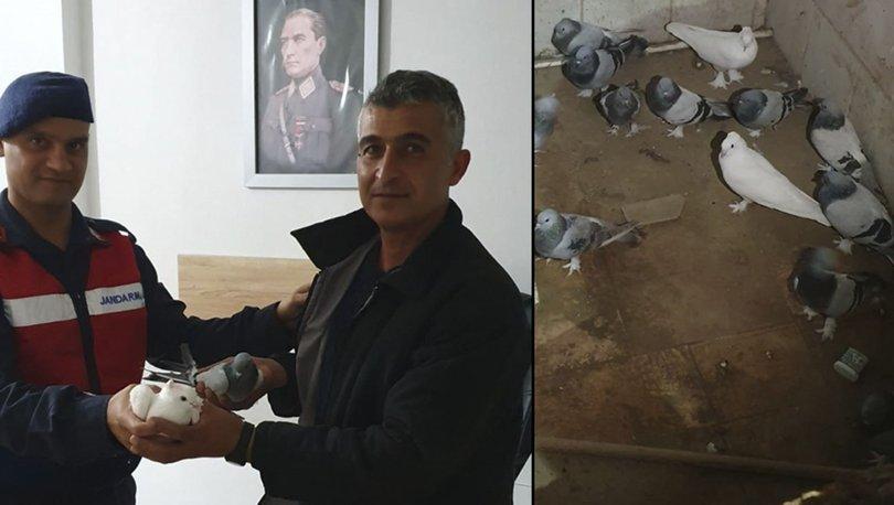 Jandarma 5 gün sonra yakaladı, güvercinler sahibine teslim edildi