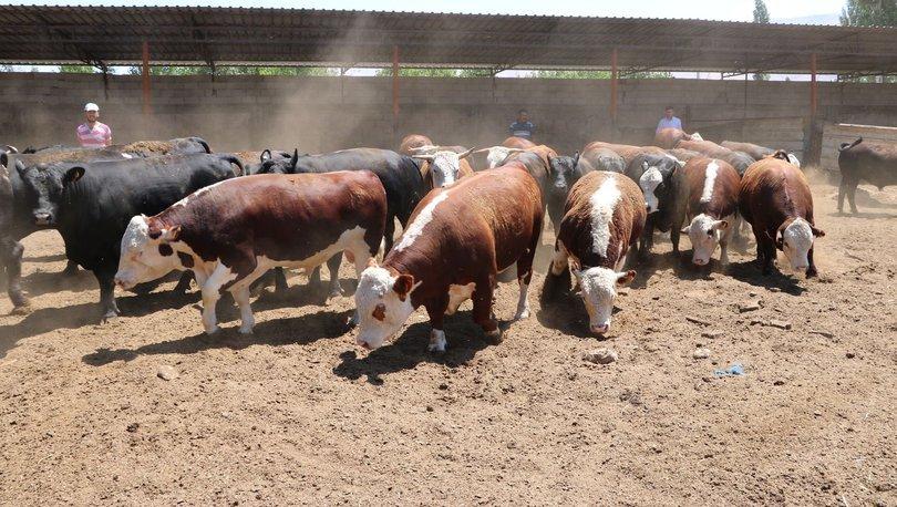 Hayvancılık desteklemeleri haczedilemeyecek - Haberler