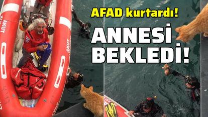 AFAD'dan kedi kurtarma