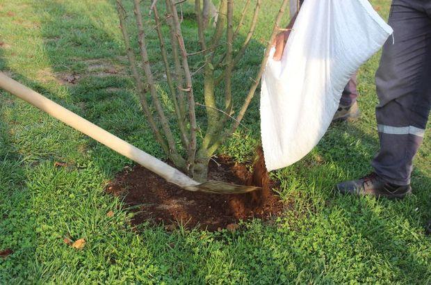Külliye'de sıfır atık! 1225 ağaç kurtarıldı