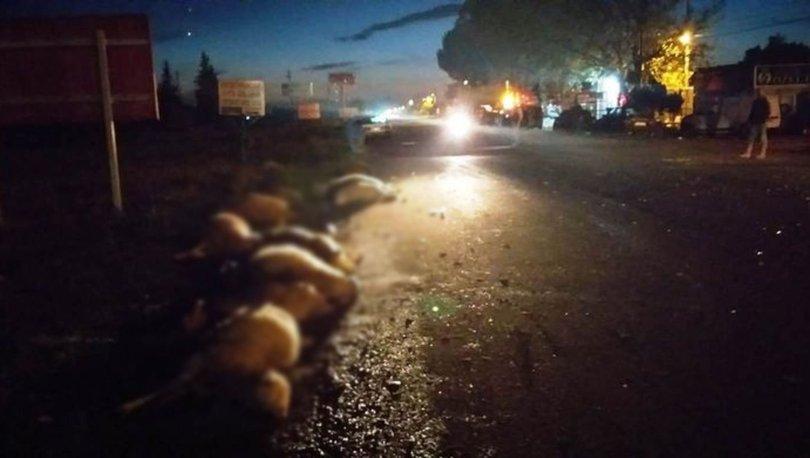 Balıkesir'de koyun sürüsüne otomobil çarptı! 15 koyun öldü