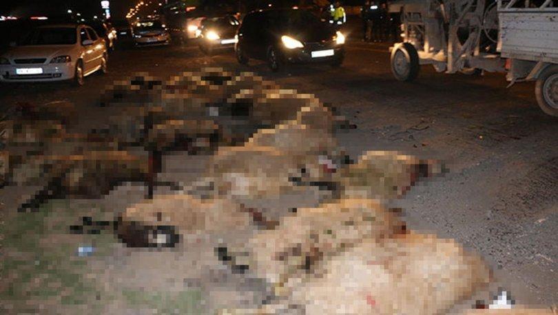 Otomobilin daldığı sürüdeki 70 koyun öldü