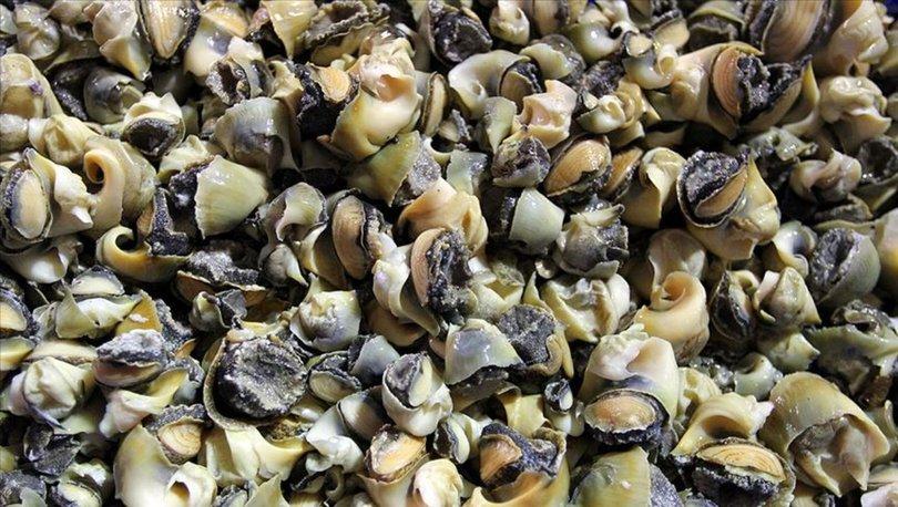 deniz salyangozu ihracatı