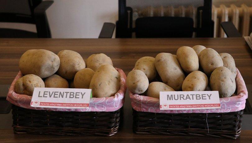 Milli patates çeşitleri Leventbey ve Muratbey