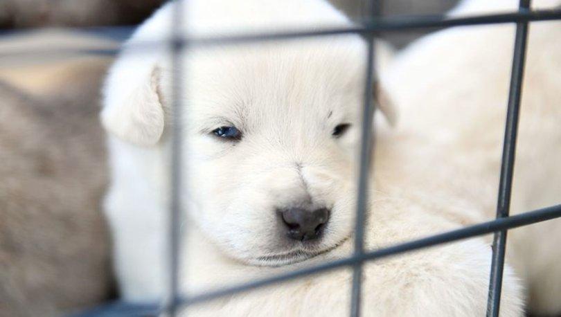 Rüyada yavru köpek görmek ne anlama gelir?