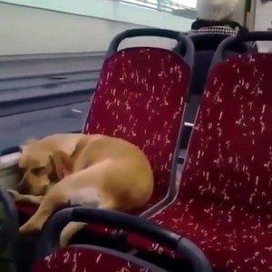 Otobüs şoföründen insanlık örneği!