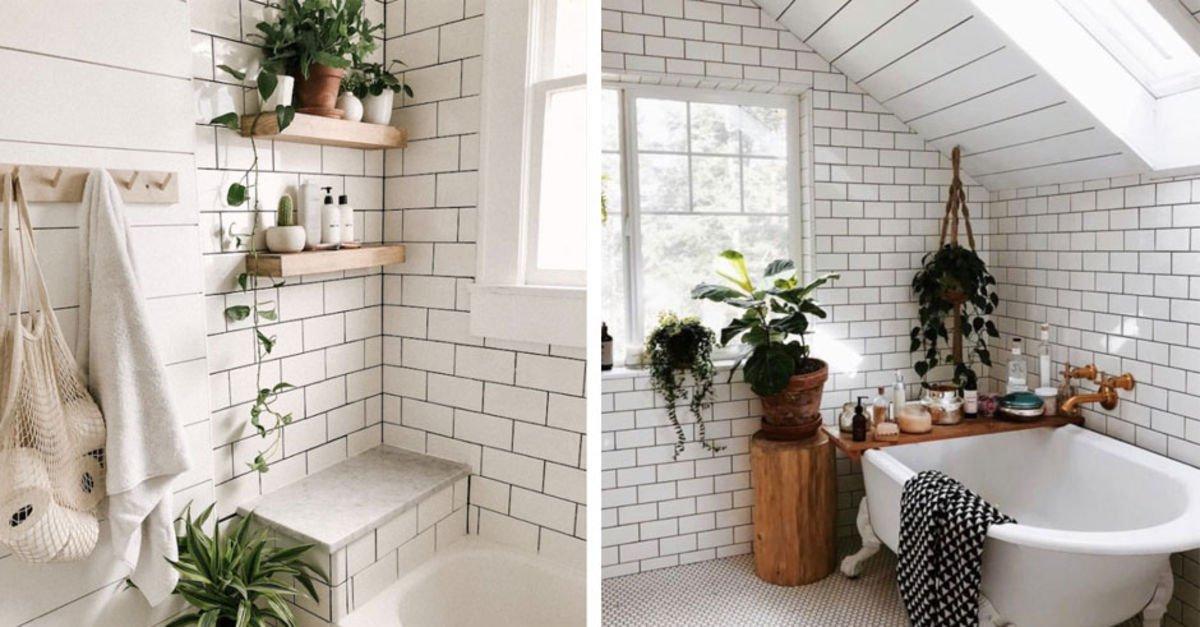 Banyoda yetiştirebileceğiniz bitkiler!