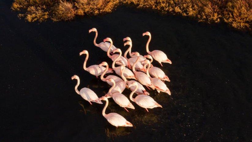 Flamingolardan görsel şölen