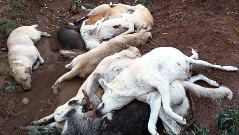 köpekleri katlettiler