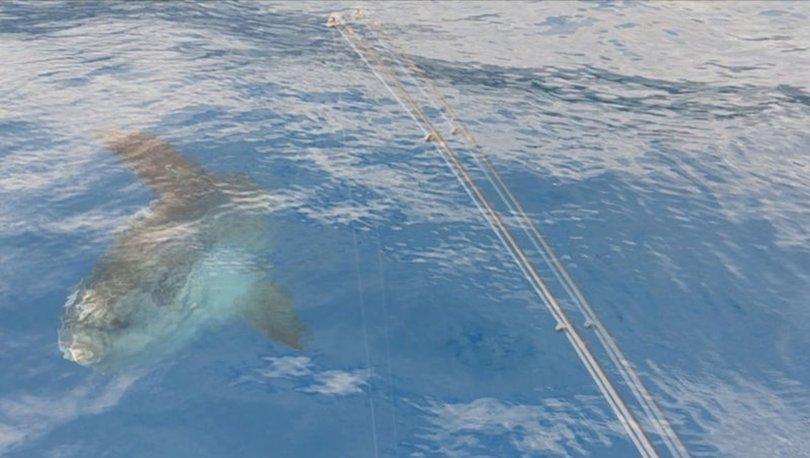 Başta köpek balığı sanıldı! Balıkçıların şaşkınlığı