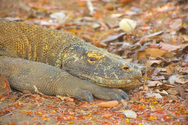Doğanın Yedi Harikası'ndan biri: Komodo Ulusal Parkı