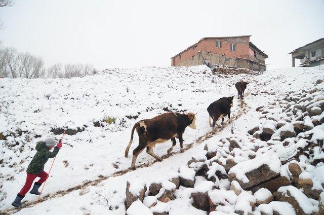 Ovacık'ta kış zorlukları ve güzellikleriyle yaşanıyor