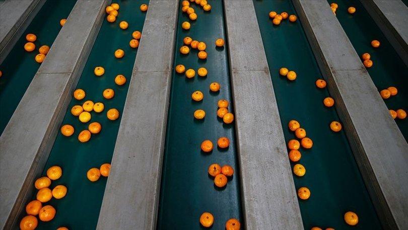 mandarin ihracı