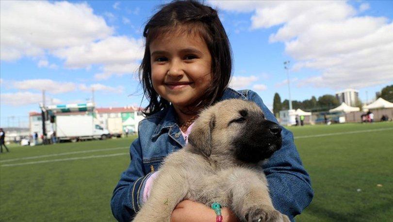 Köpek beslenen evde büyümek şizofreni riskini azaltabilir