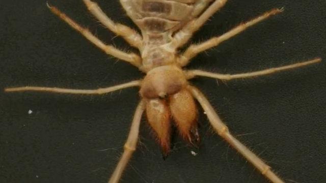 Dünyadaki en sıra dışı ve tehlikeli canlılar