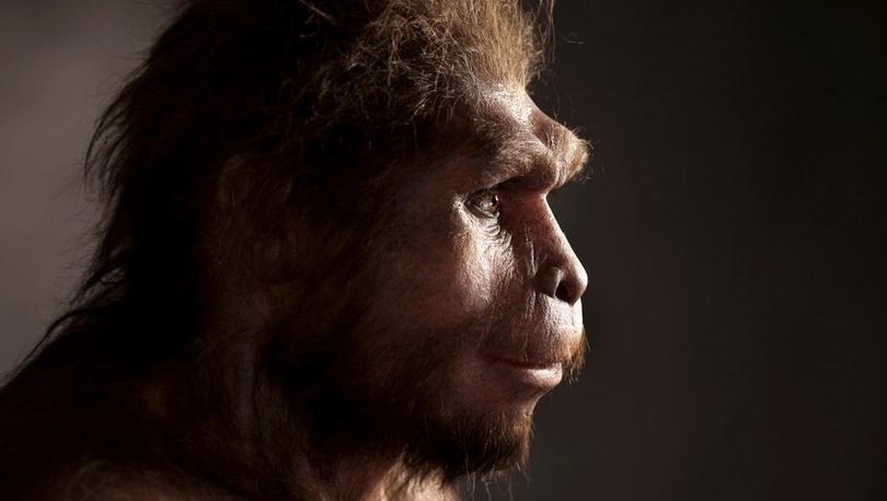 'Homo Erectus, sanıldığından çok daha uzun süre yaşadı'