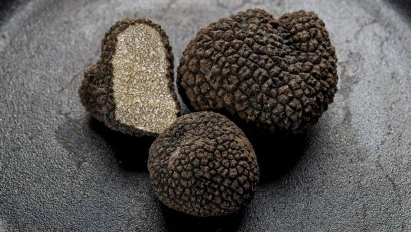 Trüf mantarı nedir? Trüf mantarı nasıl yetiştirilir? Trüf yağı nasıl üretilir? Trüfün yararları nelerdir?