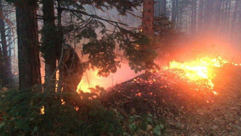 Son dakika! Uludağ Erikli Yaylası'nda orman yangını