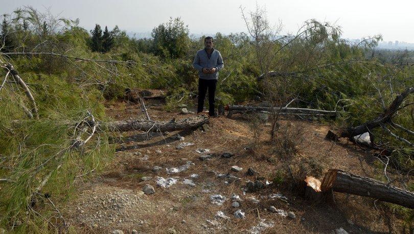 72 dönümlük alanındaki kızılçam ağaçlarını kestiler