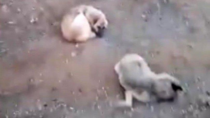 elazığ köpek