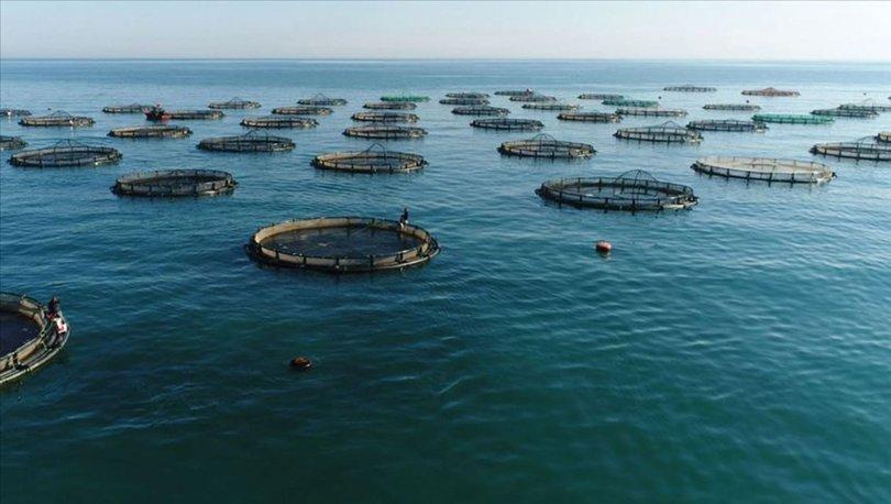 çiftlik balığı üretimi