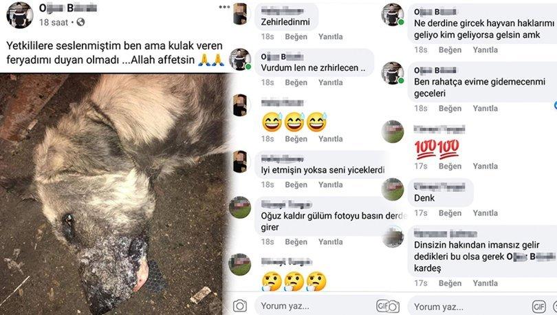 Son dakika haberleri... Korkunç vahşet! Köpeği katledip sosyal medyadan paylaştı