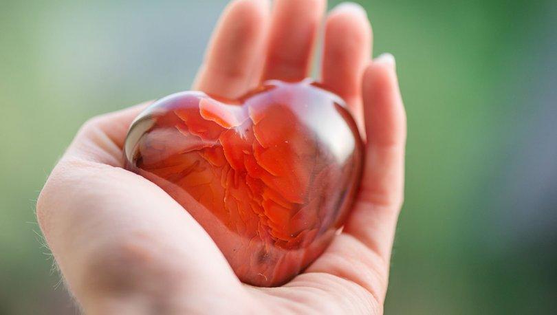 Prof. Dr. Erdöl: Dünyada organ nakli konusunda markayız