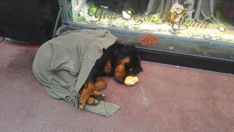 Kaldırımda yatan köpek