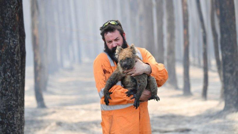 avustralya yangın koala ile ilgili görsel sonucu