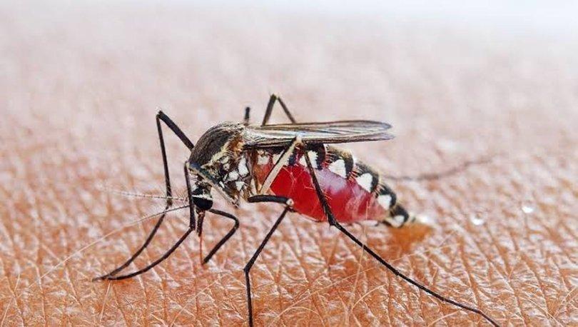 Sıtma hastalığı nedir? Sıtma belirtileri ve tedavisi nasıl olur? Sıtma hastalığı hakkında