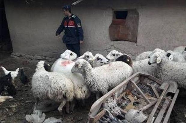Çaldıkları koyunla uyuşturucu takası!