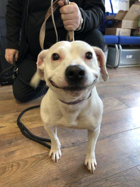 Sokağa terk edilen köpek gülüşüyle fenomen oldu