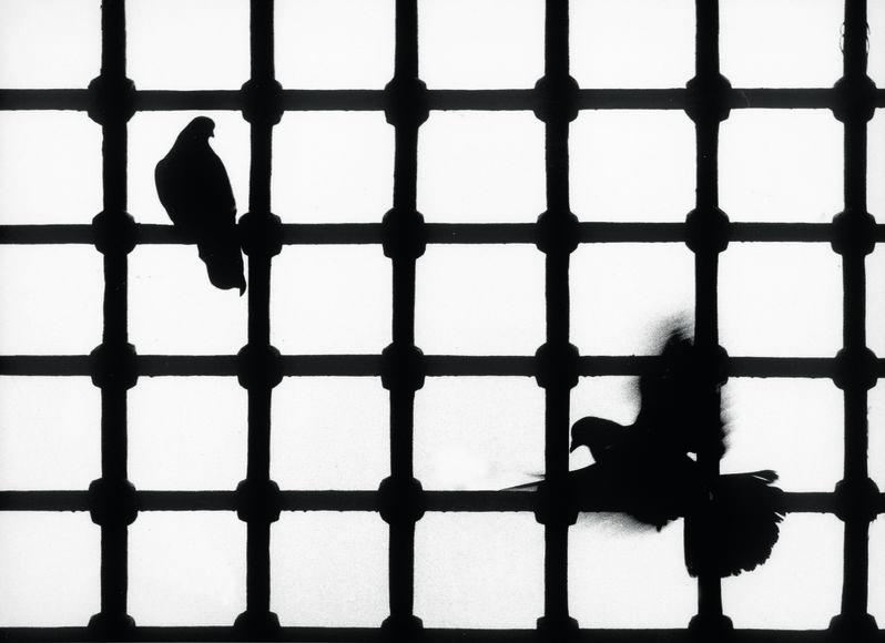 Güvercinler (Yeni Cami-İstanbul-1965)