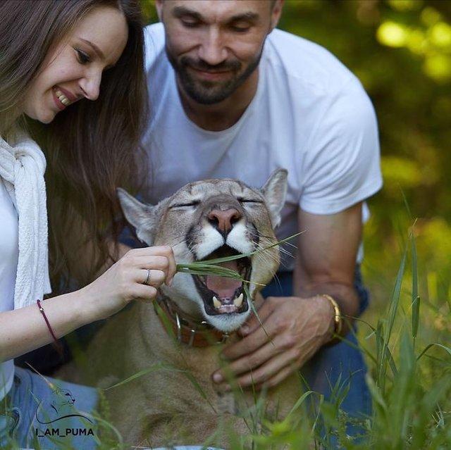 Rus ailenin sıra dışı evcil hayvanı Messi ile tanışın!