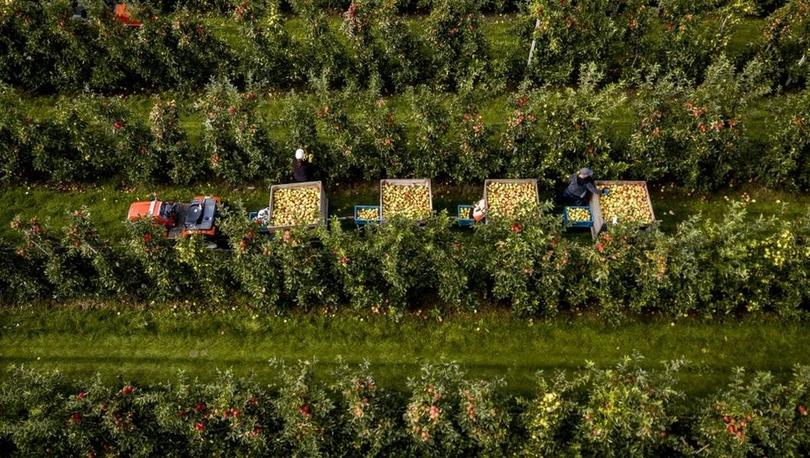 Hollanda94,5 milyar euroluk tarım ihracatı ile dünya ikincisi oldu