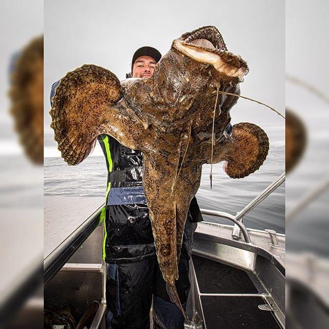 İşte Rus balıkçının ağına takılan ilginç canlılar