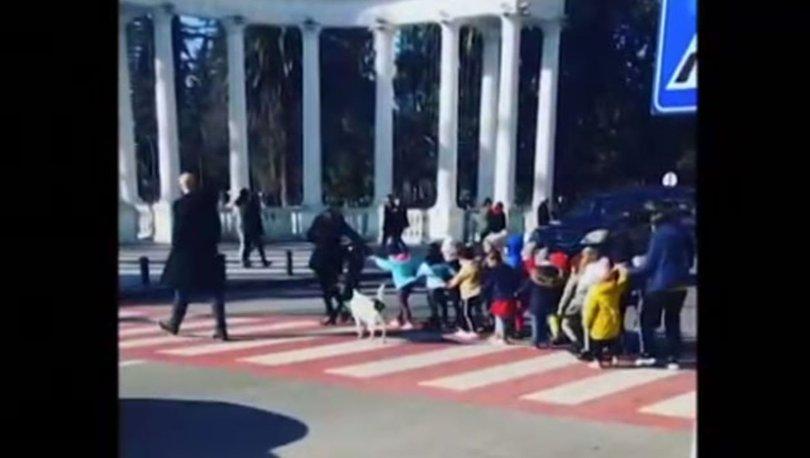 Sokak köpeği öğrencileri karşıya geçirdi!