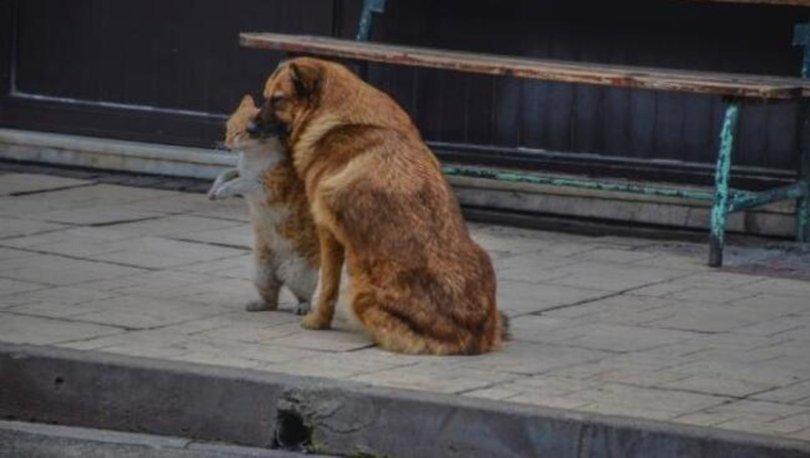 SON DAKİKA HAYVAN POLİSİ! Hayvanlara karşı suçlara 'hayvan polisi' geliyor!