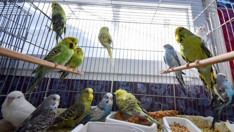 Evinde 200 muhabbet kuşu besliyor