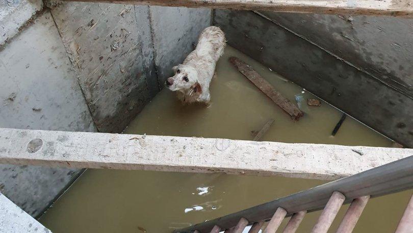 köpeği itfaiye kurtardı