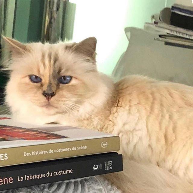 Mirasını ona bırakmıştı... İşte dünyanın en zengin kedisi!