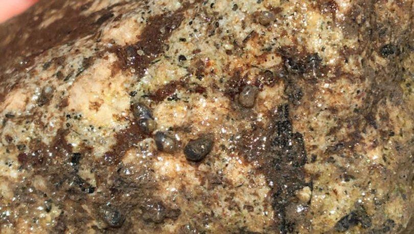 sucul salyangoz türü