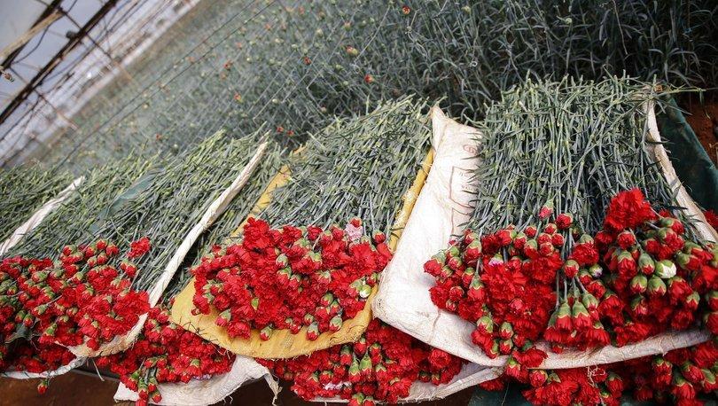 dal çiçek ihracı