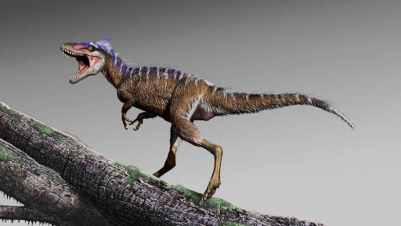 Kanada'da 'ölüm meleği' fosili bulundu