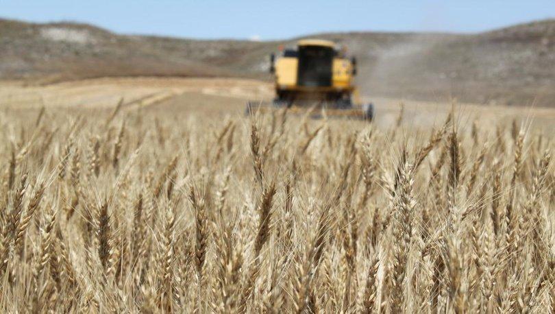 Buğday ticareti