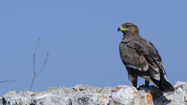 'Ferit albay' 13 yıldır kuşları gözetliyor