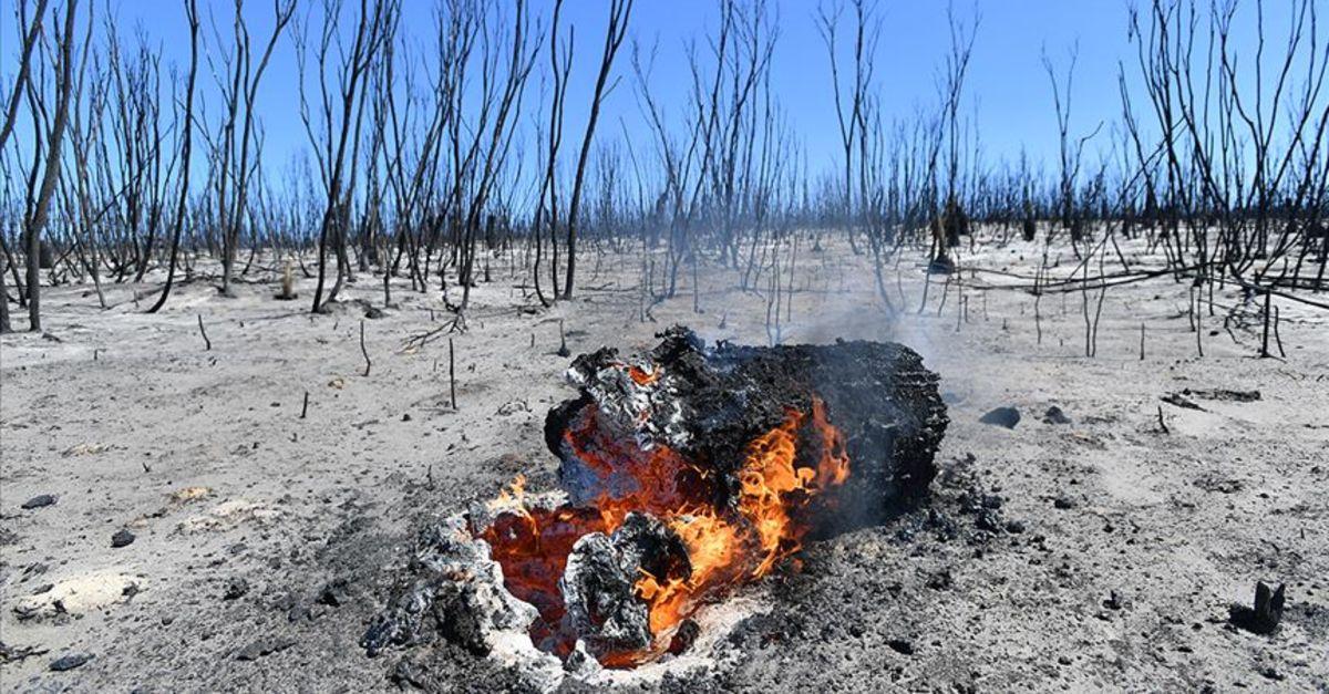 Avustralya'daki yangınlar 6 ay sonra kontrol altına alındı