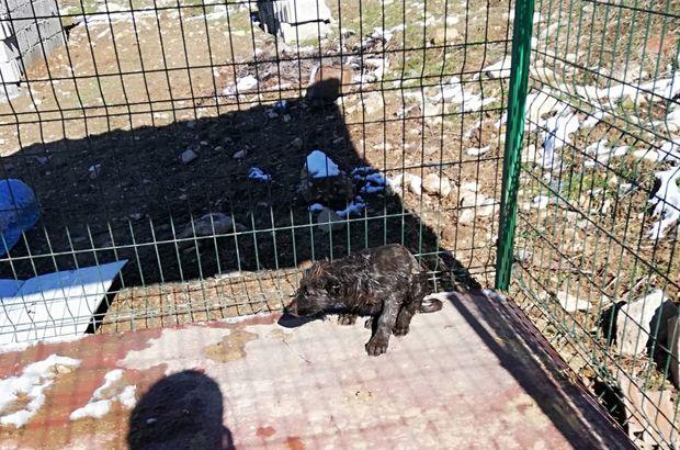 Petrole bulanan yavru köpek kurtarıldı